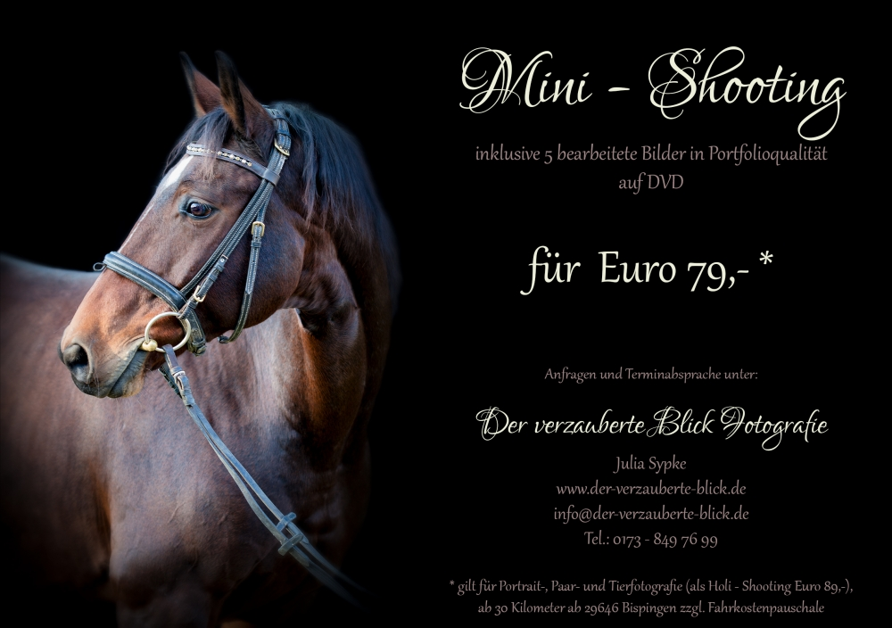 flyer-minishooting-pferde